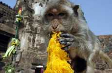 Thai Thanksgiving for Primates