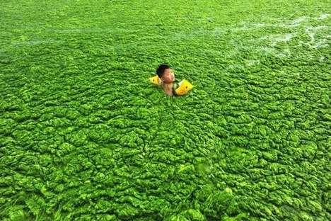 The Qingdao Beach Has Visitors Swimming in Algae