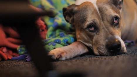 Heartfelt Canine Tribute Shorts