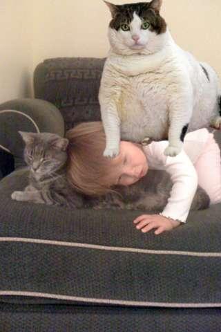 Pet Toys Cats