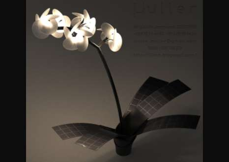 Orchidaceous Eco Illuminators