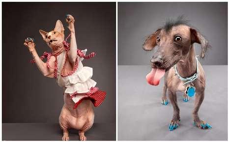 Polished Pet Portraits