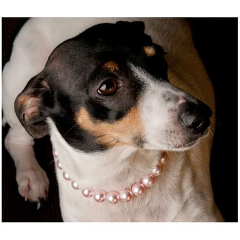 Offensive Opulent Dog Collars