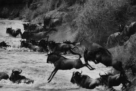 Astounding Serengeti Shots