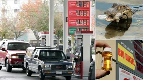 Car-Fueling Reptiles - You Could Be Filling Your Vehicle with Alligator Fat Soon
