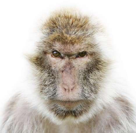 Wary Animal Portraits