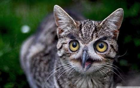 Wide-Eyed Animal Hybrids