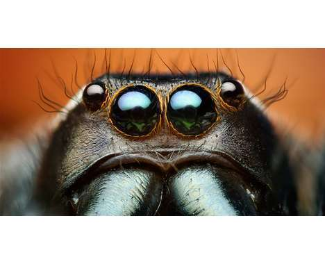 20 Creepy-Crawly Insect Captures