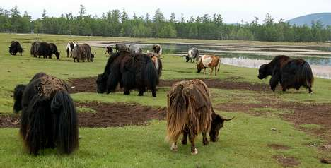 Yak Burgers Keep Eco-Friendliness in Mind