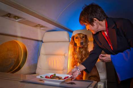 The Blue Star Jets 'FURst Class Service' Offers Four Legged Friend Flights