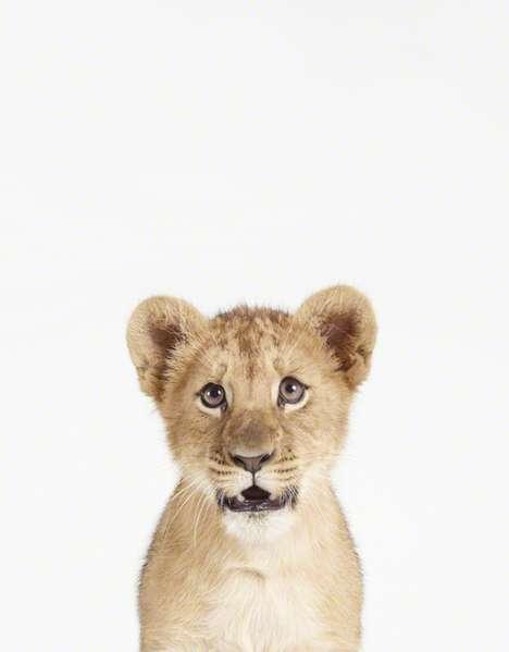 Minimalist Animal Portraits