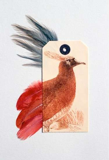 'Ghosts of Gone Birds' Project Raises Awareness About These Animals
