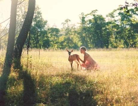 Delicate Deer Photography