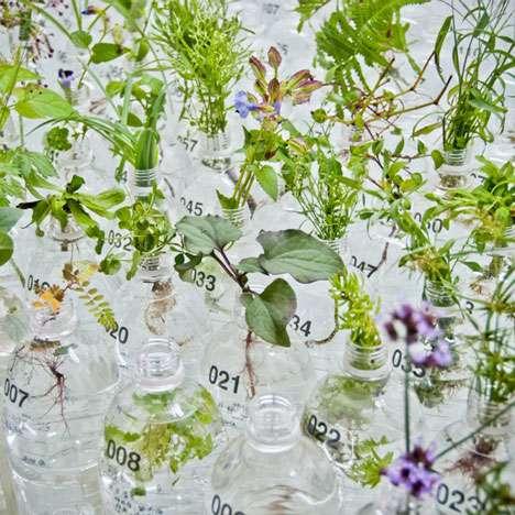 Spring Water-Grown Plants