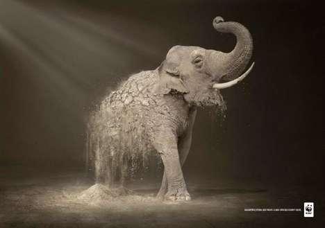 Disintegrating Animal Advertising