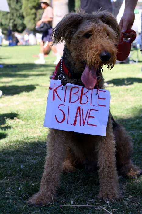 The Awwccupy Wall Street Tumblr Showcases Cute Pets at Occupy Protests