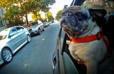 Pooch Perspective Montages - 'Dogs in Cars' Features Hypnotic Slow Motion Canine Footage