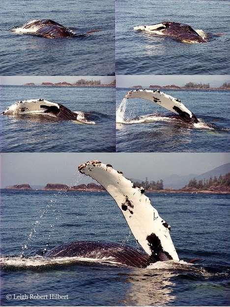 Sea Creature Tech