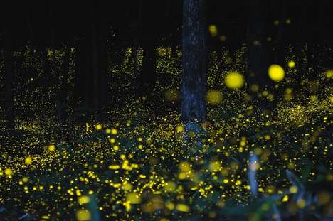 Enchanting Firefly Photography
