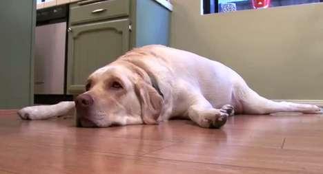 Doggie Diet Campaigns