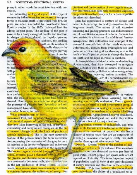 Superimposed Avian Illustrations