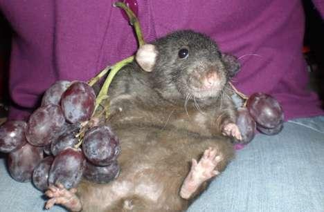 Ridiculous Rodent Photoblogs
