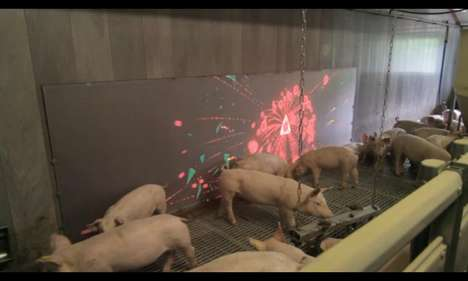 Pig Chase Allows Users to Interact With Pigs