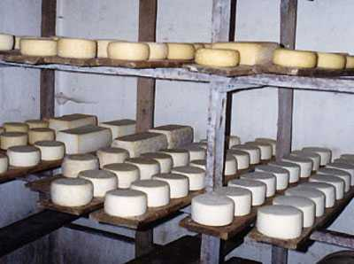 Cheese Made of Breast Milk