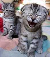 Scientific Measure of Laughter