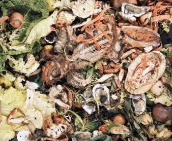 Gross Garbage Captures