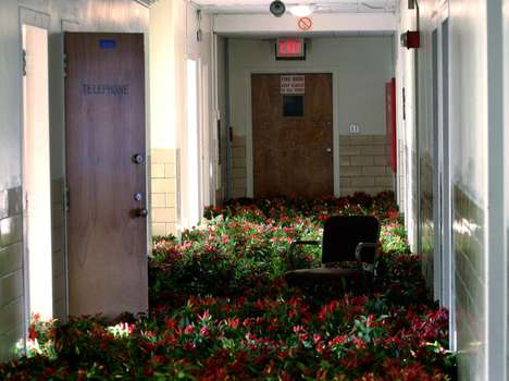 Deliberately Overgrown Hospitals