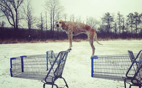 Planking Dog Projects - 'Maddie The Coonhound' Makes Normal Balancing Acts Look Like a Breeze