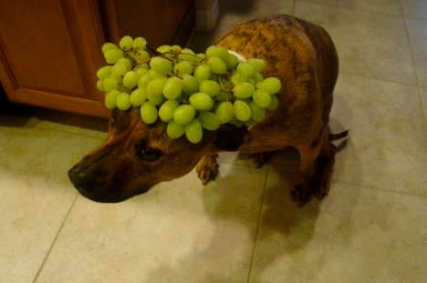 Cute Meal-Balancing Canines - The 'Food On My Dog' Tumblr is Adorable and Outrageous
