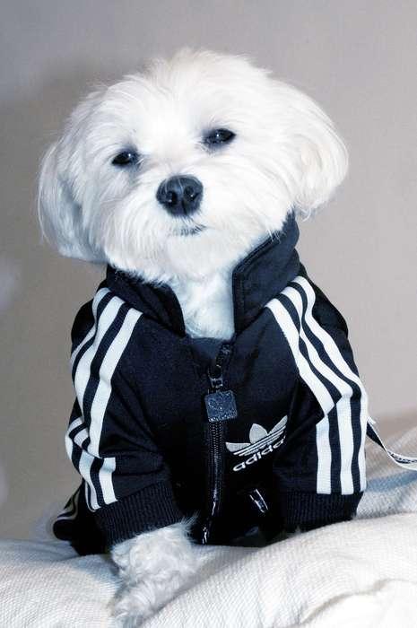 Sleek Puppy Suits