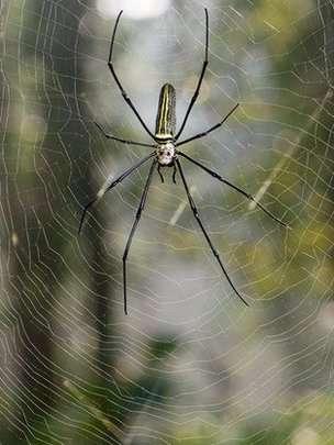 Spider Silk Violin Strings