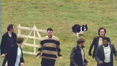 Human-Herding Canine Ads