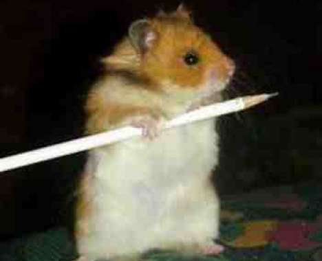 27 Hilarious Hamster Innovations