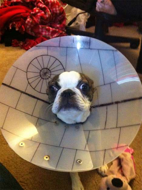 The Star Wars Dog Cone is Not a Force to be Trifled With