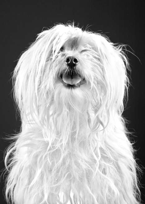 Classic Canine Renderings