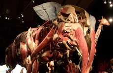 Muscle Tissue Mammal Museums