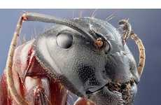 100 Intriguing Insect Innovations