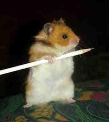 Criminal Rodents