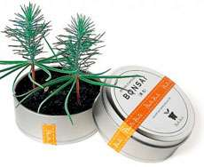 Miniature Canned Forests