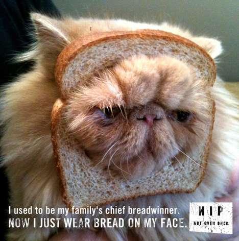 Feline-Concerned Parodies