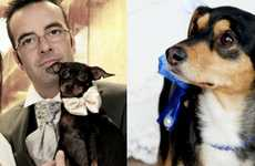 Canine Wedding Coordinators - Weddings & Dogs Gets Your Pooch Ready for the Big Day