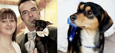 Canine Wedding Coordinators