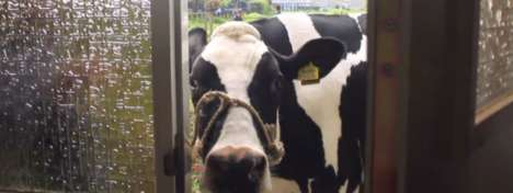 Doorbell-Ringing Cow Campaigns