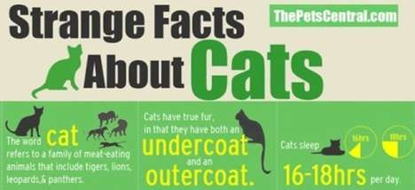 The 'Strange Facts About Cats' Infographic is Revealing