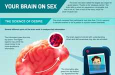 No-Nonsense Naughtiness Facts - This Unlikely Infograph Dissects the Science of Desire