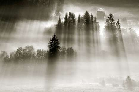 Ethereal Nature Captures